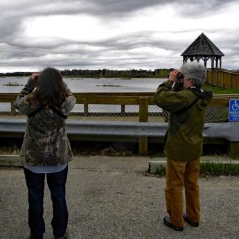 Birding at Houghton Lake Flats gazebo